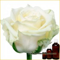 Троянда Біла запашка