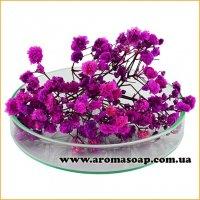 Гипсофила стабилизированная фиолетовая 1 г
