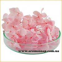 Гортензія стабілізована рожева 500 мг