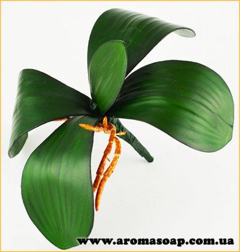 Добавка в букет 25 1 шт Листья орхидеи