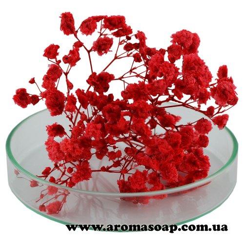 Гіпсофіла стабілізована червона 1 г