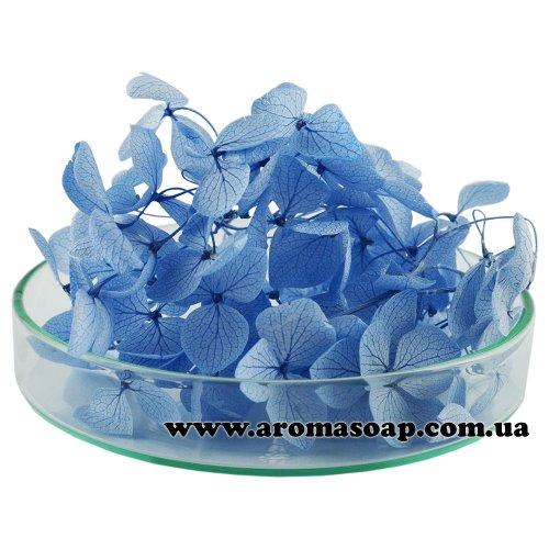 Гортензия стабилизированная голубая 500 мг