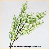 Добавка в букет 54 1 шт Аспарагус зеленый