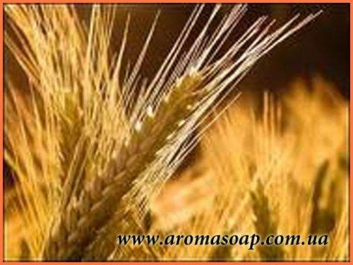 Масло Зародышей пшеницы рафинированное опт 5 кг.
