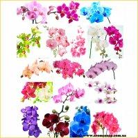 Набор картинок Орхидеи на ветке