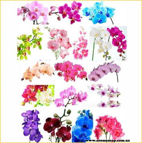 Набір картинок Орхідеї на гілці