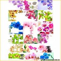 Набор картинок Орхидея