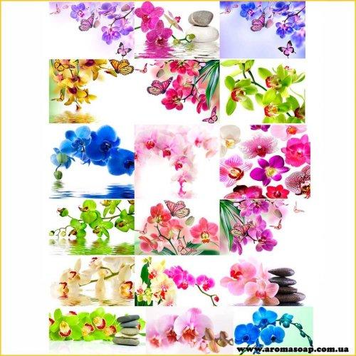 Набір картинок Орхідея