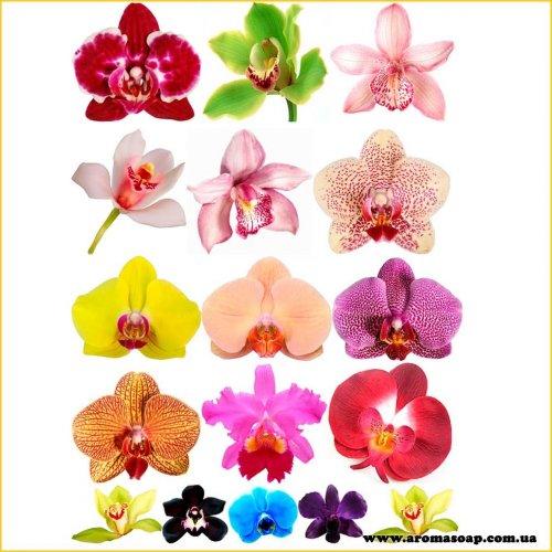 Набір картинок Квітка Орхідеї