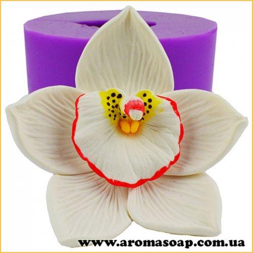 Орхідея Цимбідіум 3D еліт-форма