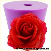 Роза раскрытая Софи Лорен 3D элит-форма